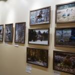 Фотовыставка Птицы тайги