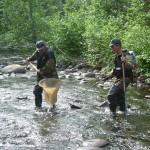Обследование рек на наличие Жемчужницы.