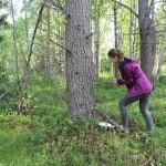 Определение возраста деревьев