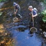 Обследование рек на наличие транспорта для глохидий