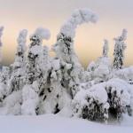 НП Паанаярви, гора Нуорунен. А.Хейккинен
