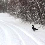 Вышла птичка погулять, камушков пособирать, а тут снег...