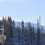 Вид на вершину Нуорунен от границы парка